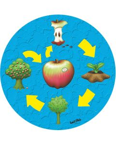 Life Cycle – The Apple Puzzle